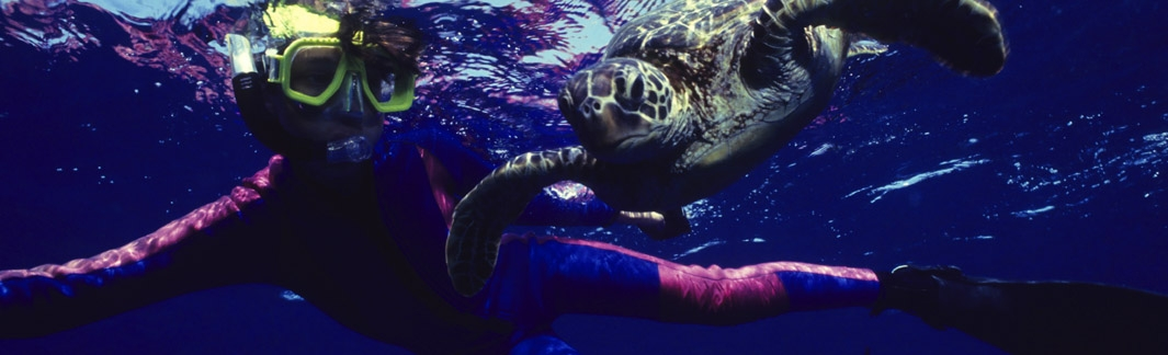 Maui Activities, Things to do in Maui