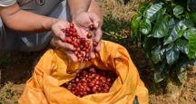 Kona Coffee Living History Farm, Hawaii Attractions